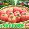 喘息予防夏野菜・トマト【その原因、Xにあり! 8月18日】リコピンを効率的に摂取する方法・大谷義夫